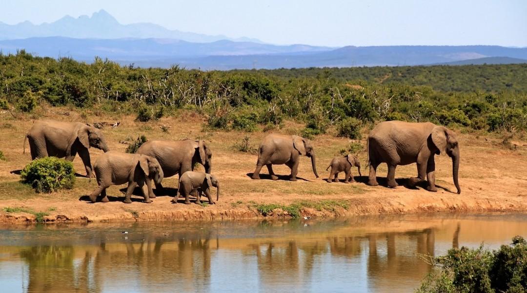Go Wild: The Best Spots to Meet Wildlife