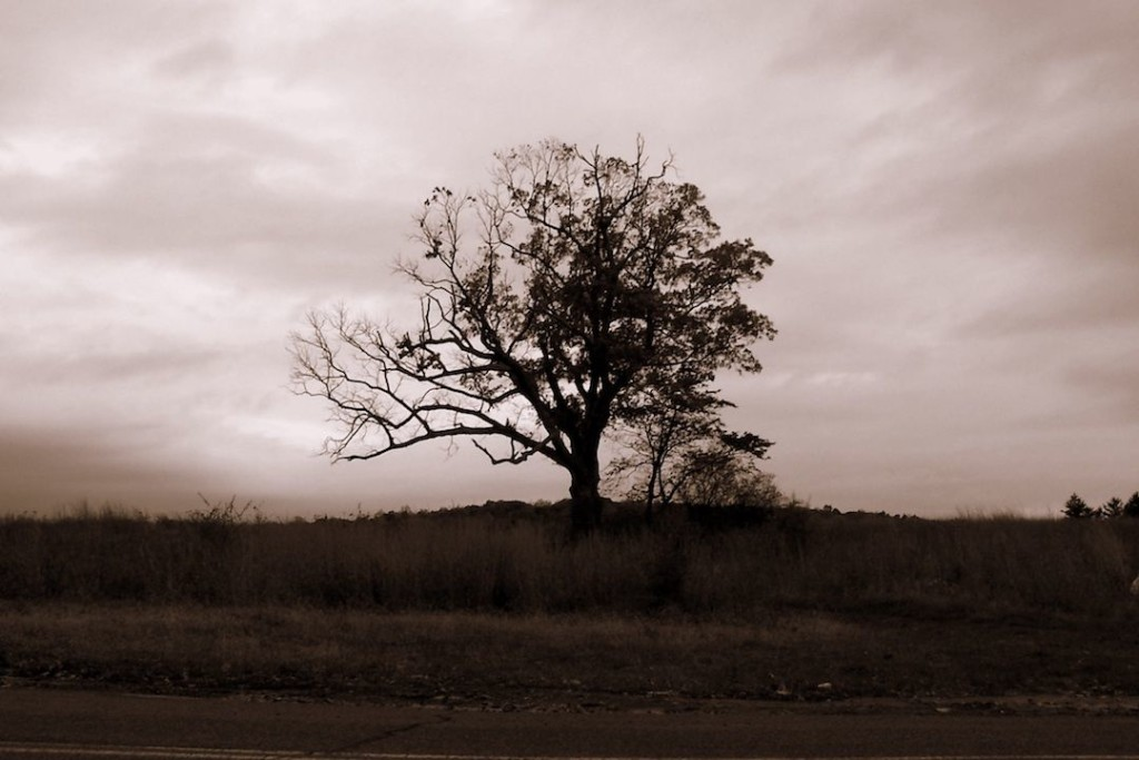Local legend and icon, the Devil's Tree at dusk