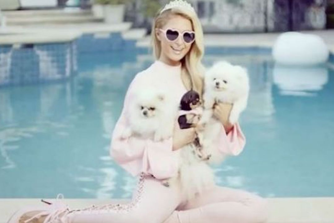 Paris-Hilton-dogs-vacation