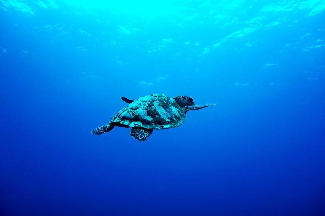 Turtle-Gili-Trawangan