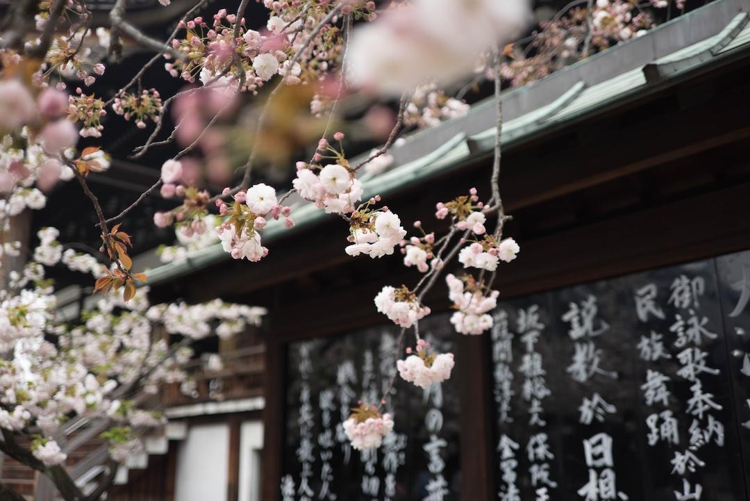 Japan-Spring