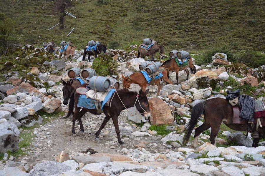 donkeys salktany