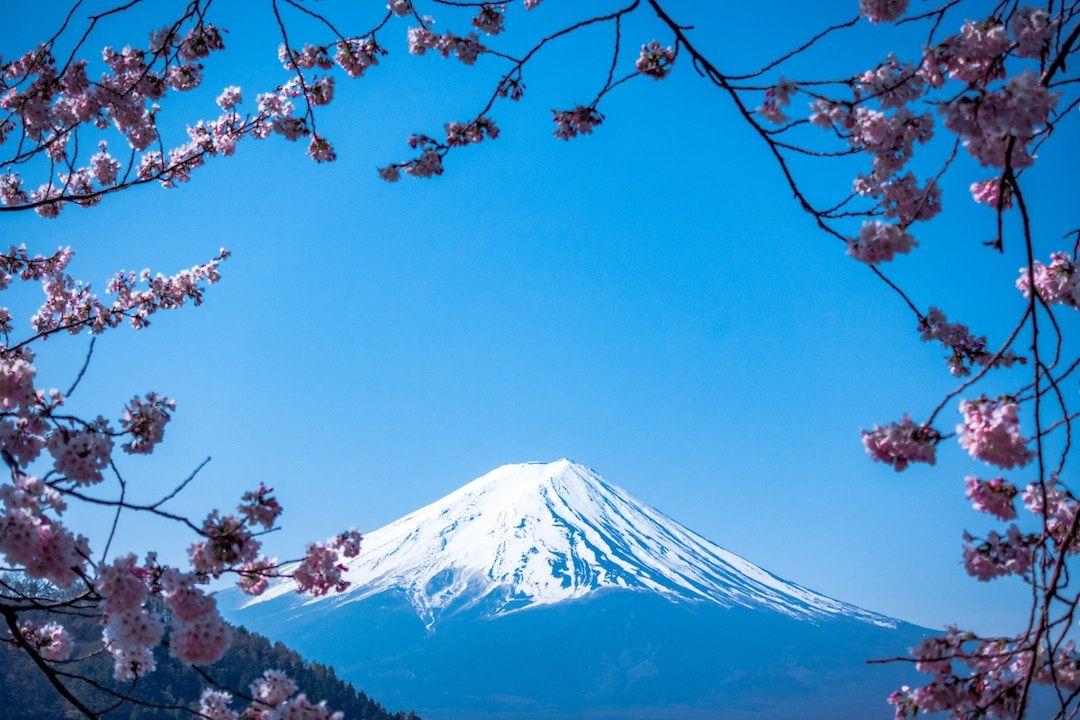 Mount Fuji and Cherry Blossoms _ Japan_Should I Visit Japan