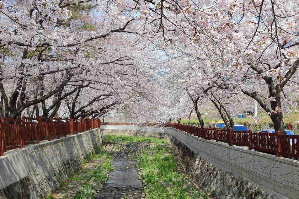 Jinhae South Korea