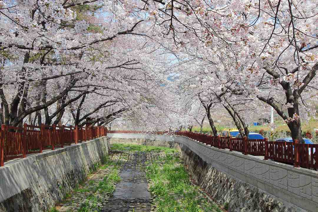 Jinhae South Korea