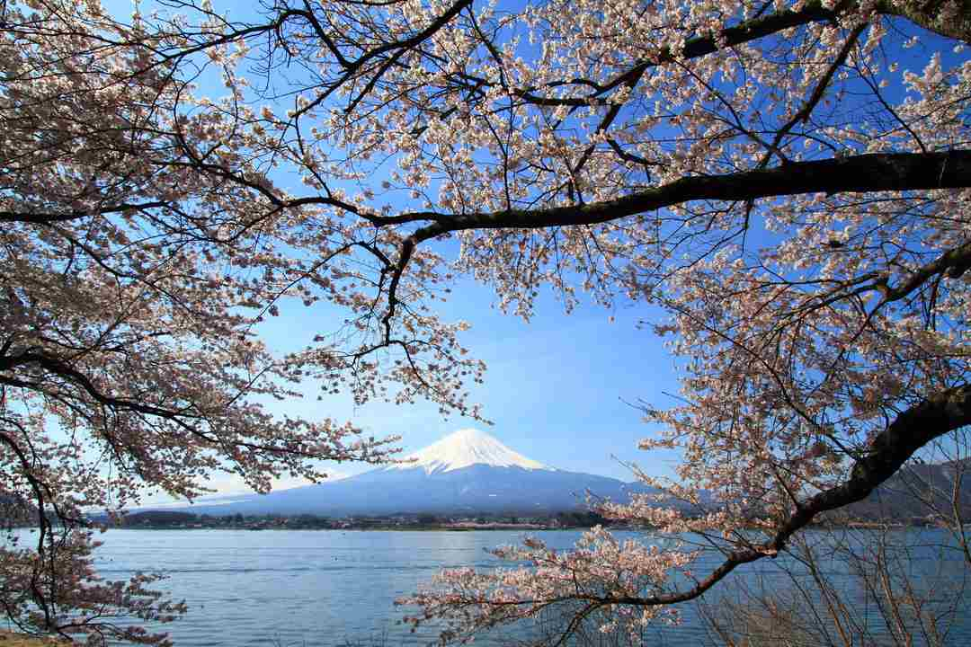 best places to see cherry blossoms