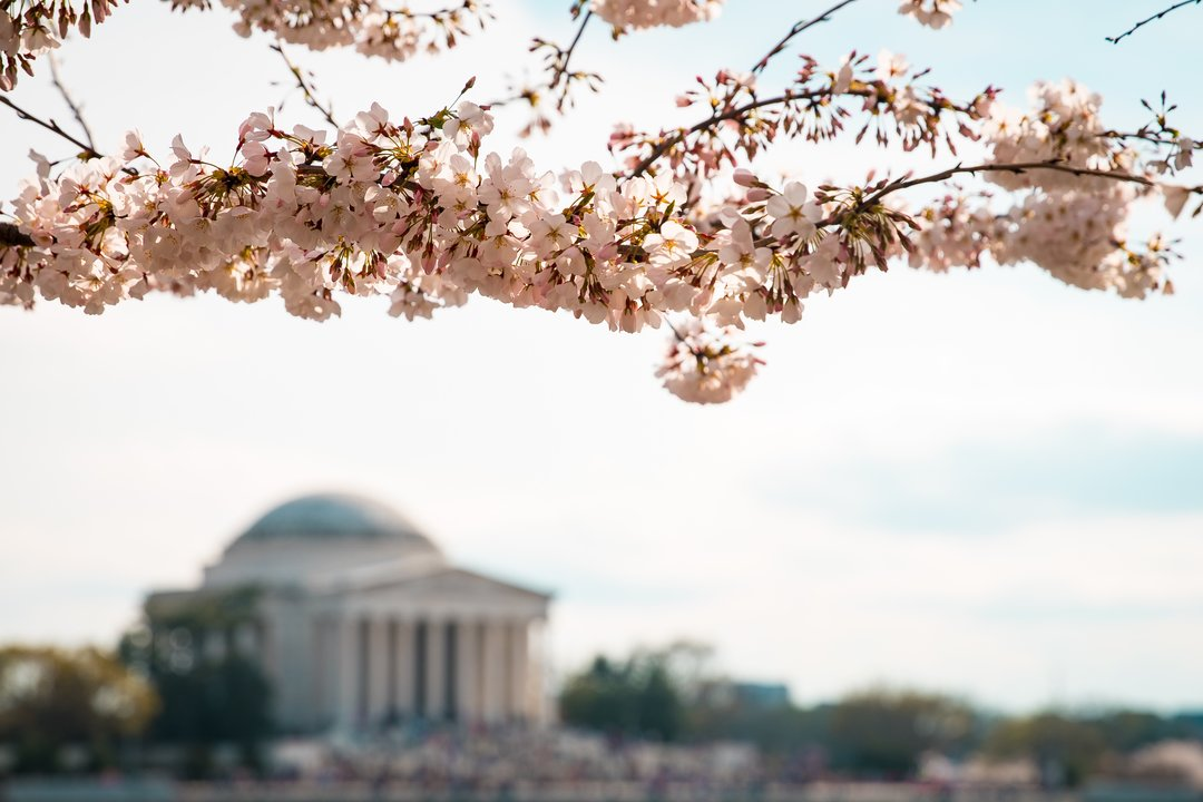11 of the Best Places to See Cherry Blossoms Bloom