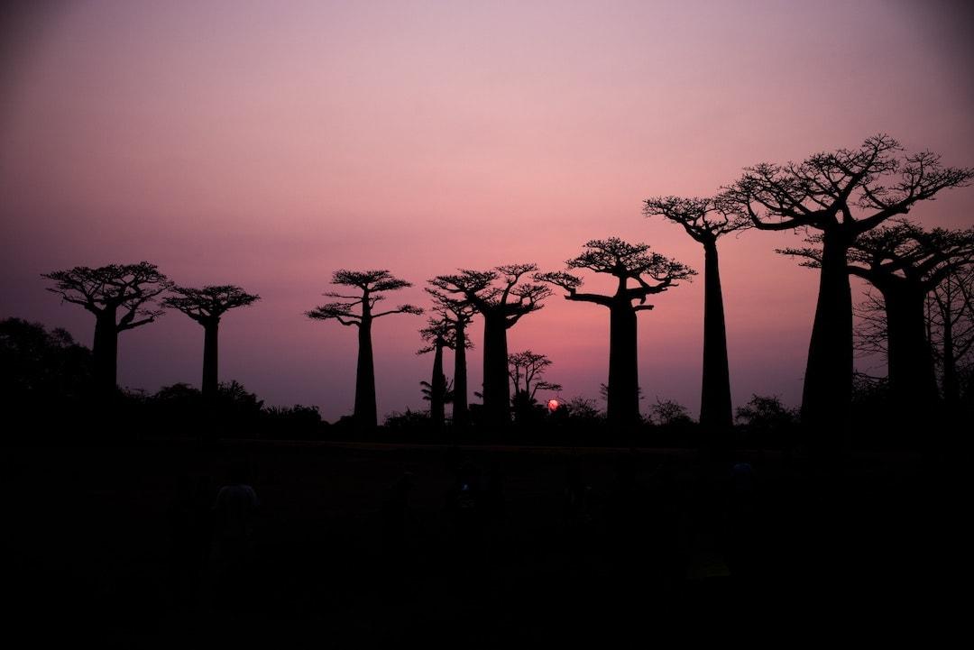 Galapagos Vs Madagascar