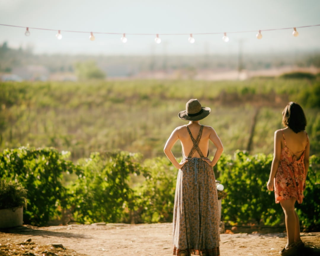 What to expect on a wine tour