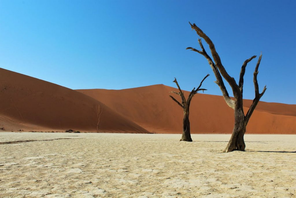 two lone trees in a desert plain Namibia with a red dune and blue sky