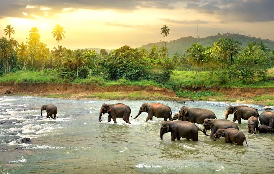 Backpacker's guide to Sri Lanka