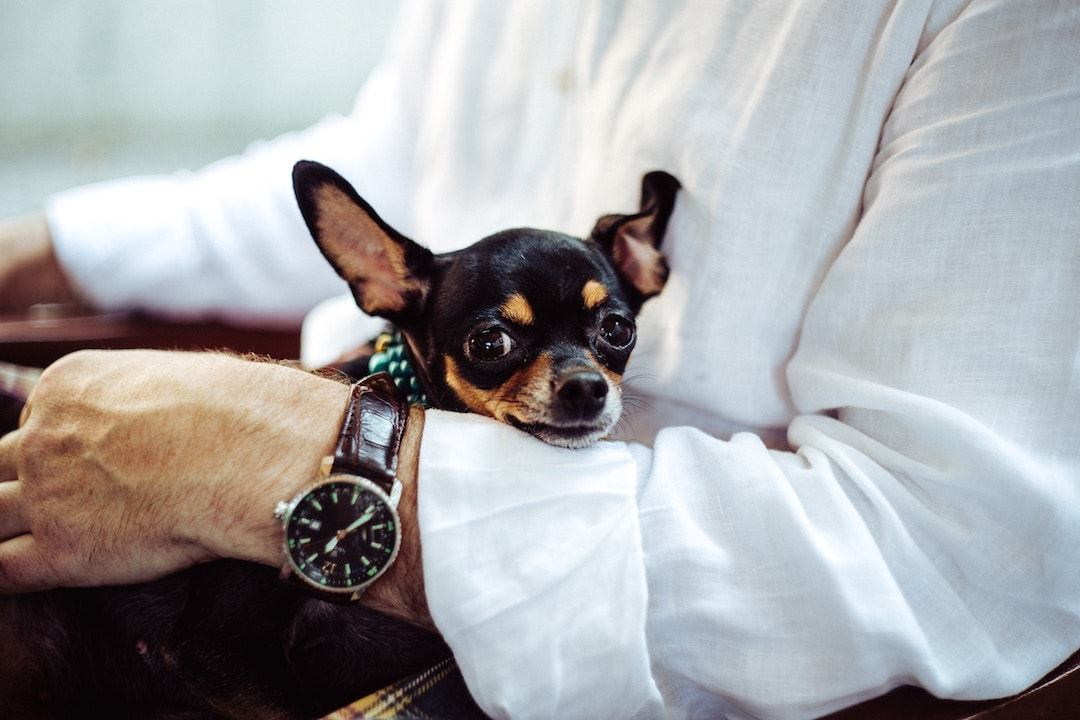 The 20 Most Pet-Friendly International Airlines Ranked