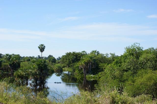 Water Jungle Nature Paraguay Wetland Swamp