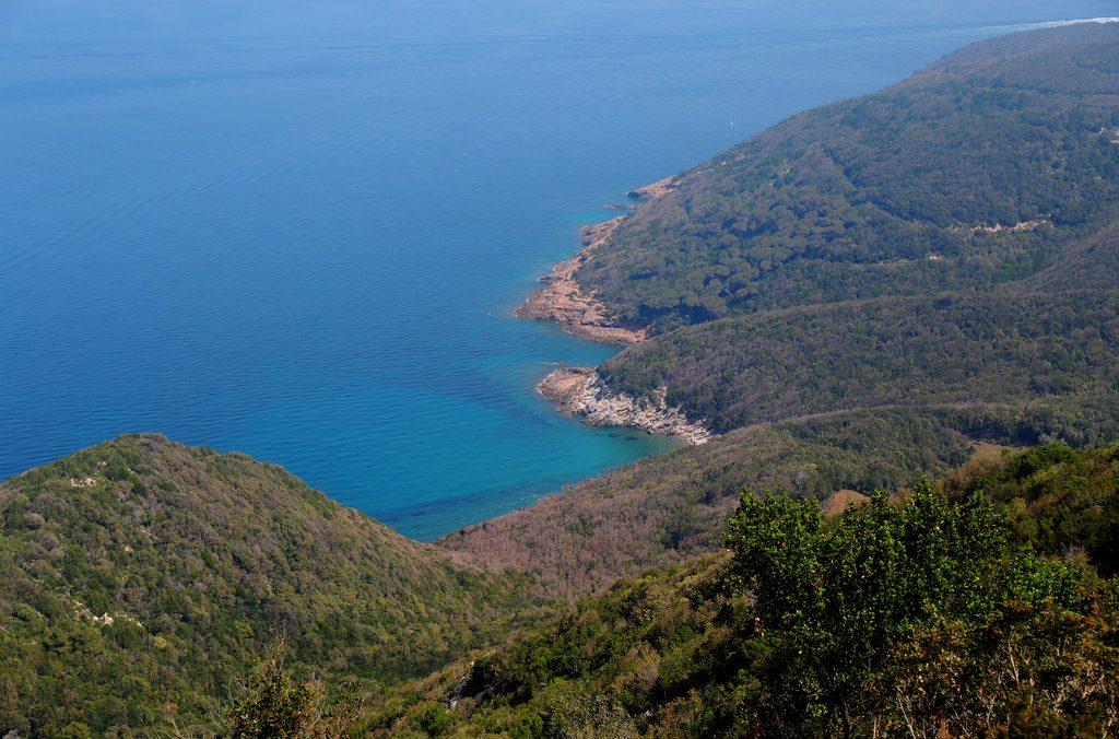 Pristine blue waters and lush pine trees on the coast of the small island of Elba