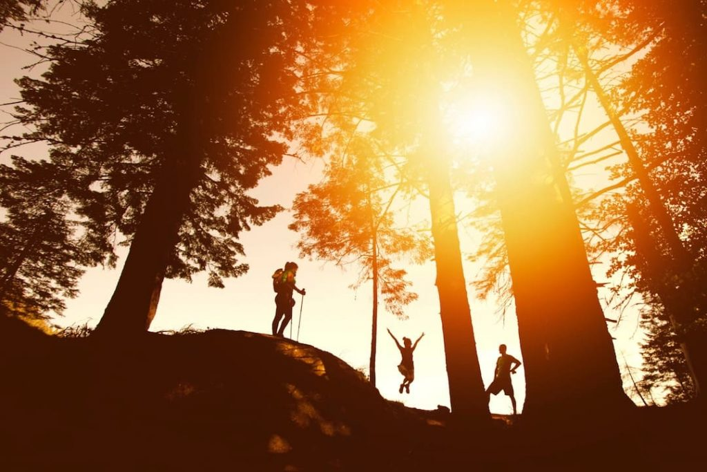 Three people in silhouette surrounded by trees at sunset
