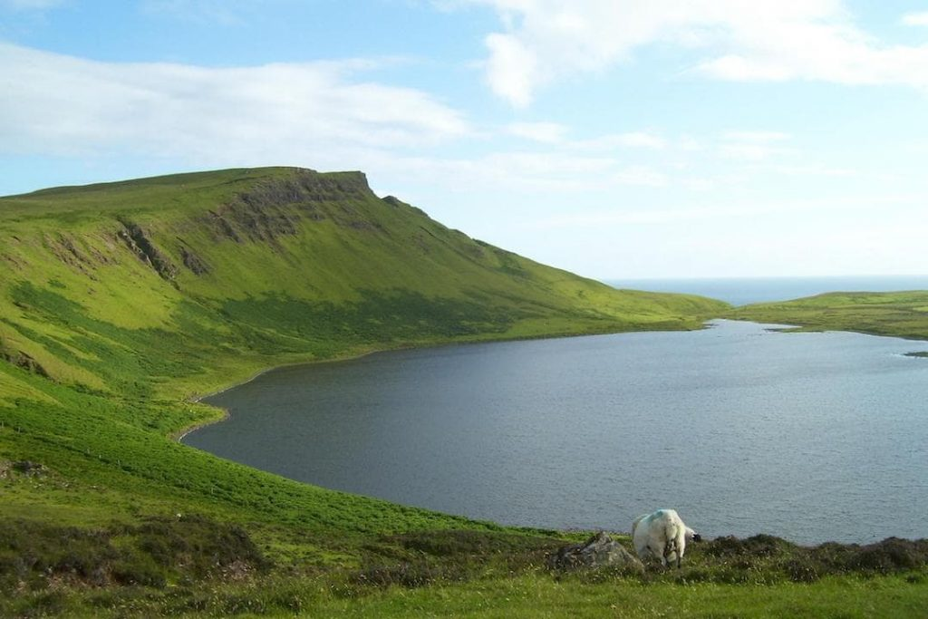 A sheep grazes by the water in the Isle of Skye