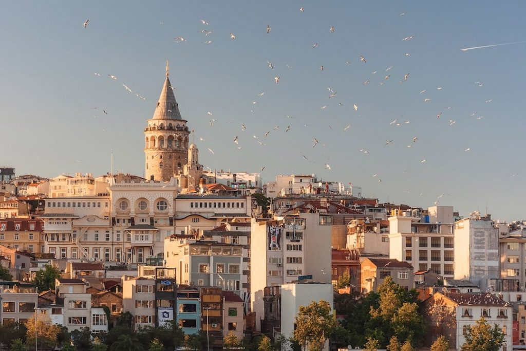 Birds flying over Istanbul, Turkey