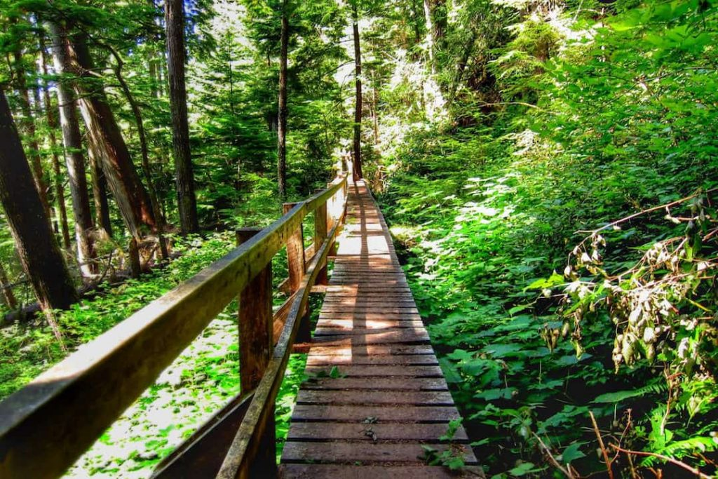 A bridge in a green forest on the West Coast Trail, Vancouver