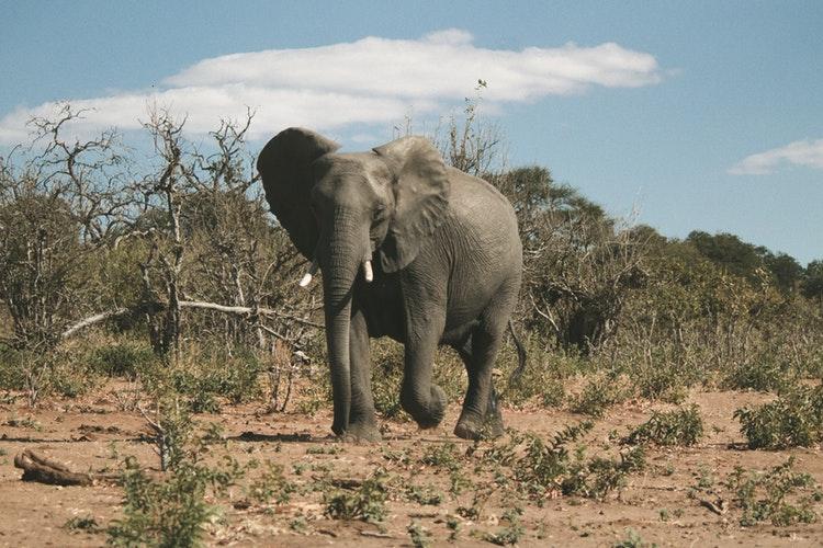 gray elephant under blue sky during daytime