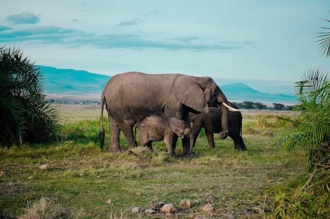 A small family of elephants in Tanzania