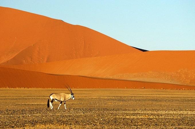 An antelope in Namib-Naukluft National Park, Namibia