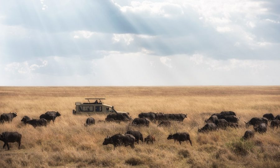 Safari truck driving through tanzania