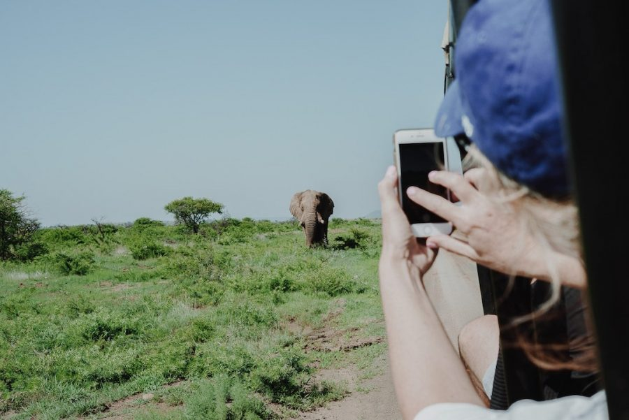 Person with an iPhone taking a photo of an elephant on a safari tour
