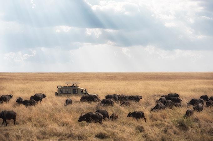 Serengeti vs. Masai Mara: Which National Park Should You Visit?