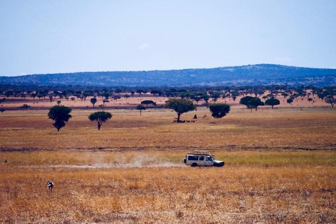 A safari jeep driving through serengeti national park