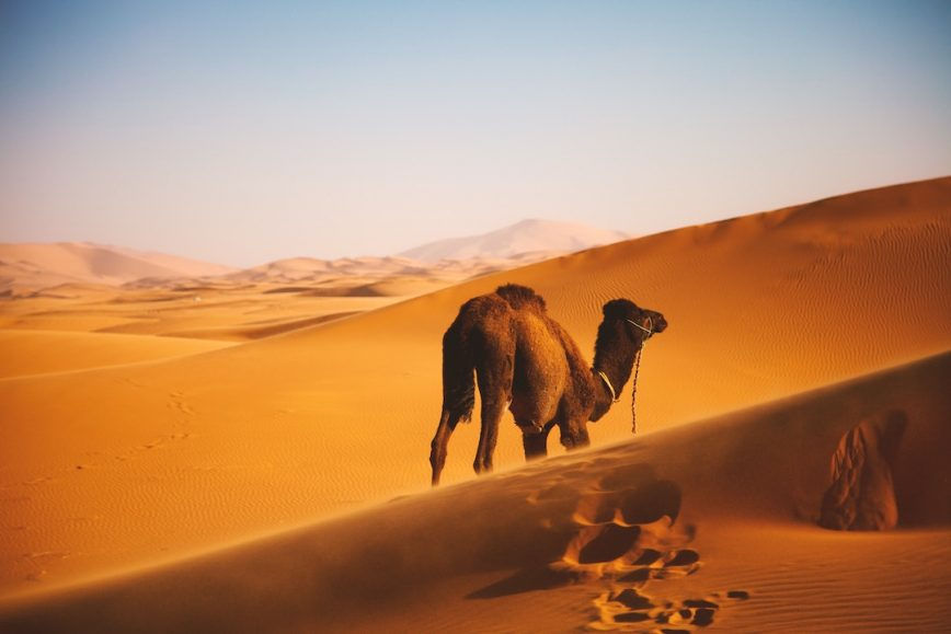 Off the Beaten Path in Morocco
