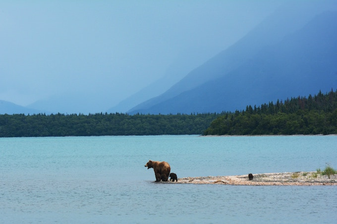 A bear with her two cubs at the base of a body of water in Alaska