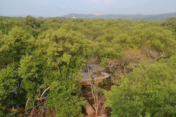 Green trees at the Dr. Salim Ali Bird Sanctuary, Goa, India