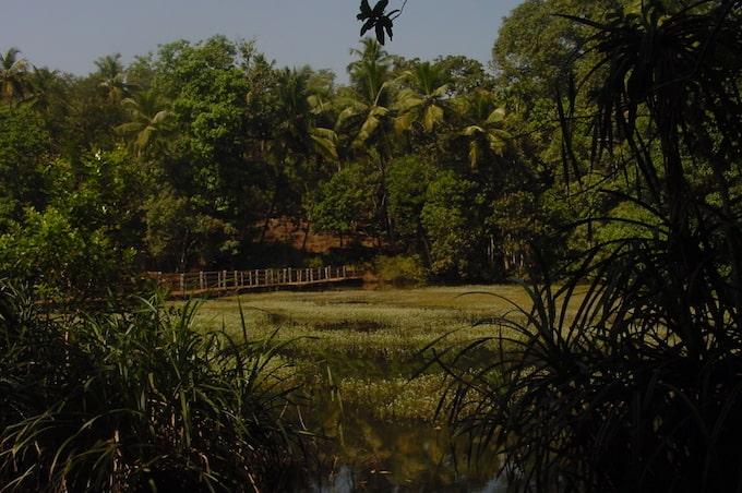 A spice plantation in a tropical jungle in Goa, India