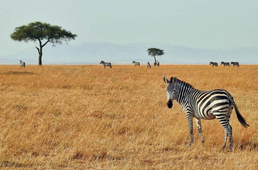 The Best Safari Parks in Kenya