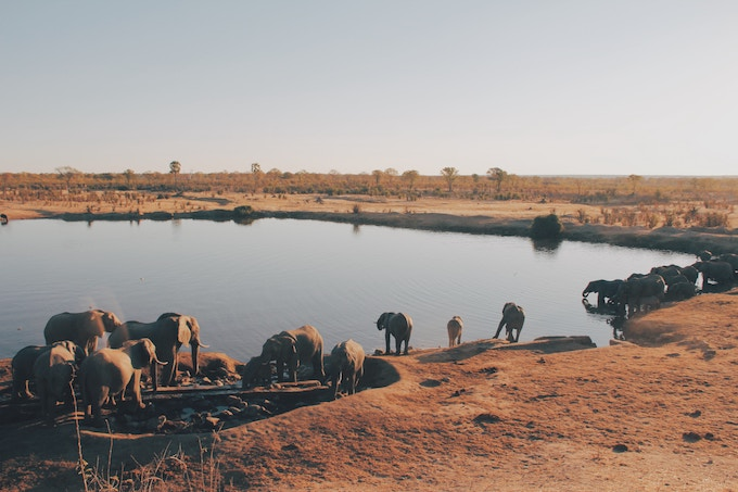 Elephants around a water hole in Africa