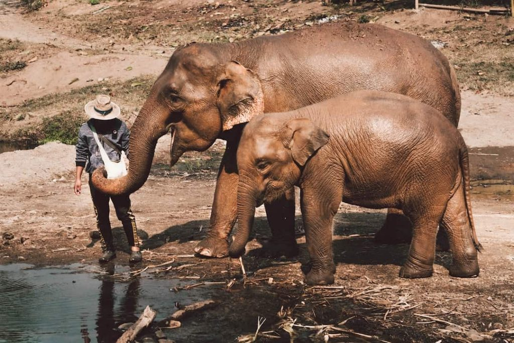 Two elephants standing near water at Elephant Nature Park, Chiang Mai, Thailand