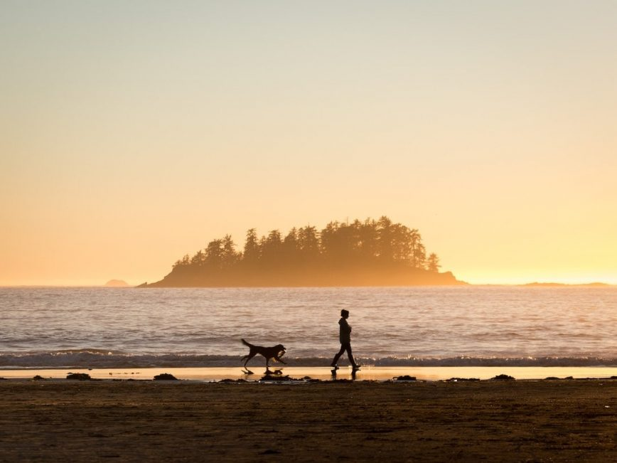 The 20 Most Pet-Friendly Beaches, Ranked
