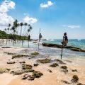 Local stilt fisherman at Mirissa Beach, Sri Lanka