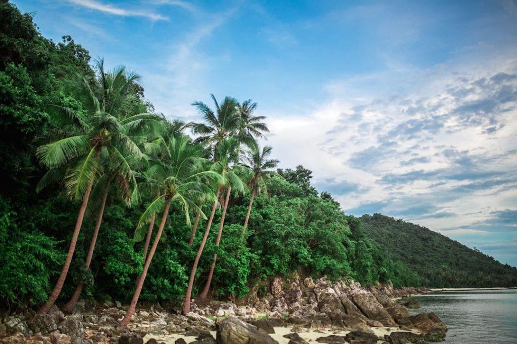 Palm trees beside a beach in Koh Samui, Thailand