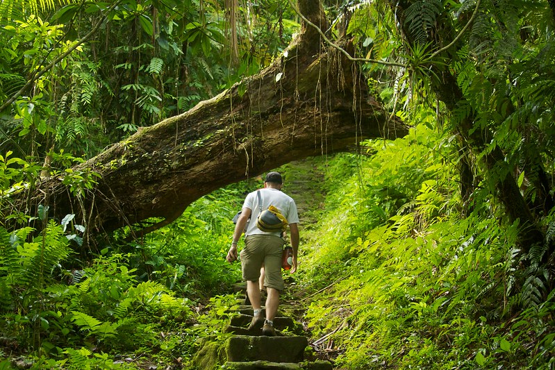 man walking up the stairs in a green forest