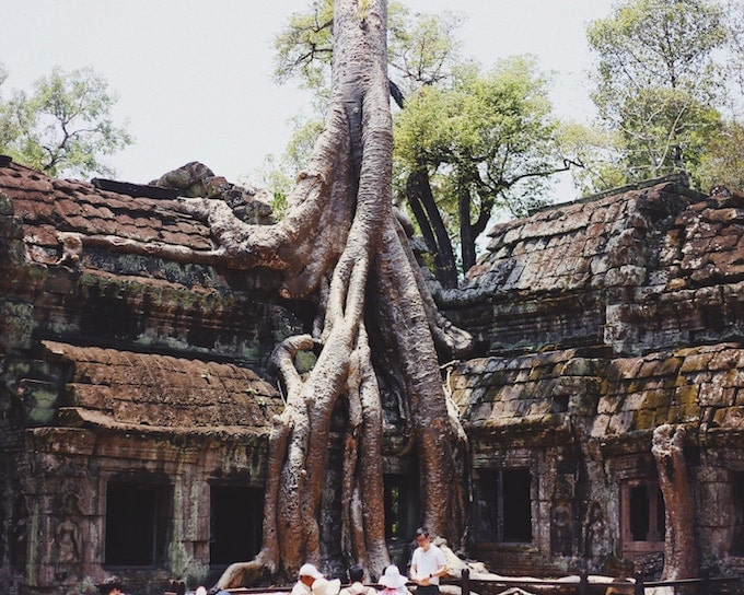 A tree growing into a building in Angkor Wat, Siem Reap, Cambodia