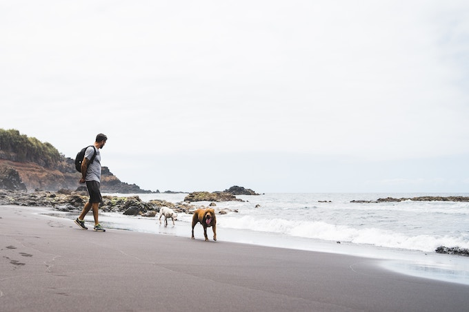 A man walking two dogs on a black sand beach in Tenerife, Spain