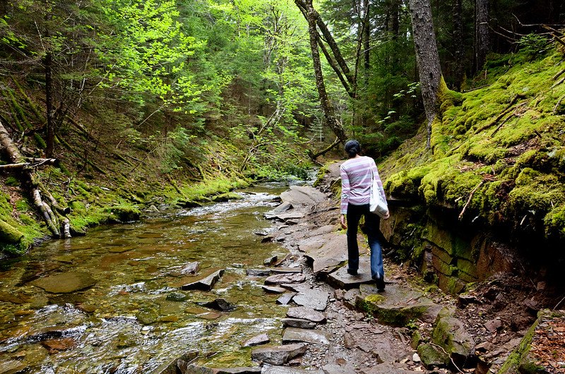 a person walking along a rocky trail in the forest