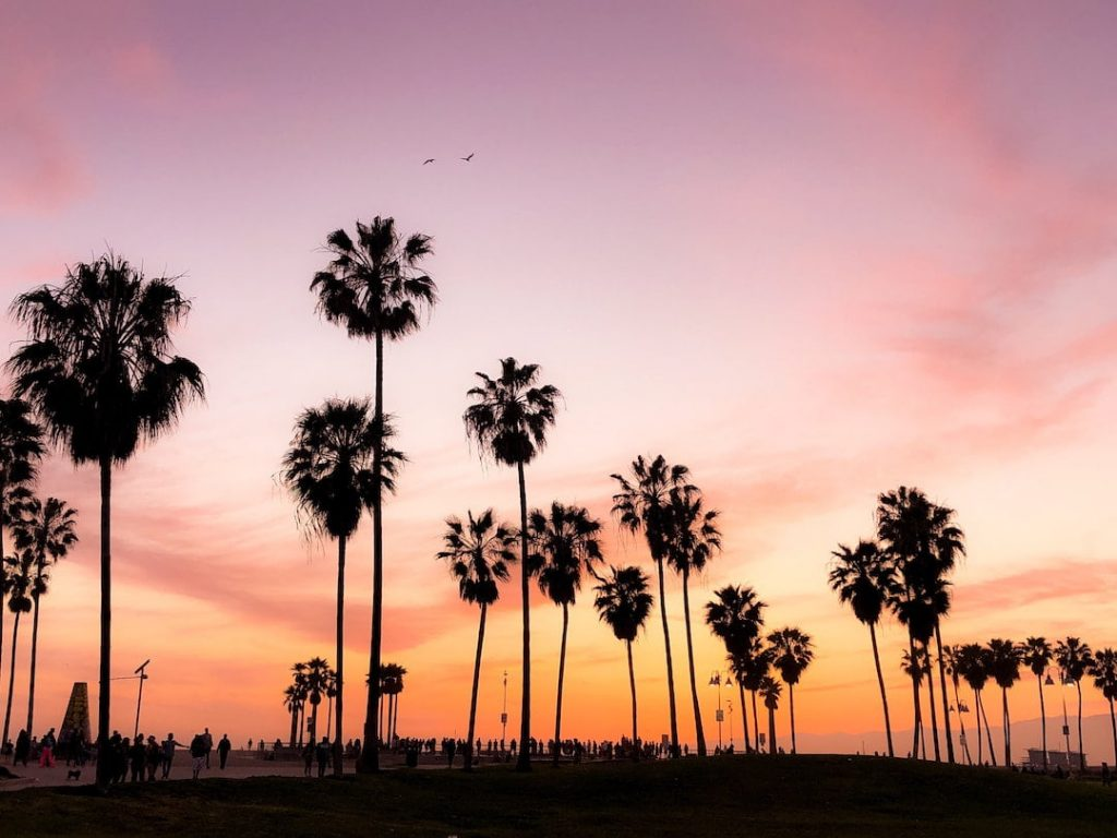 Silhouettes of palm trees against a pink sky in California