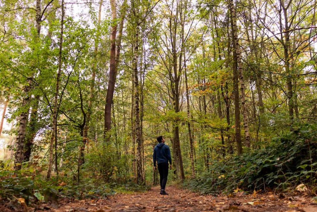 Person standing in a forest