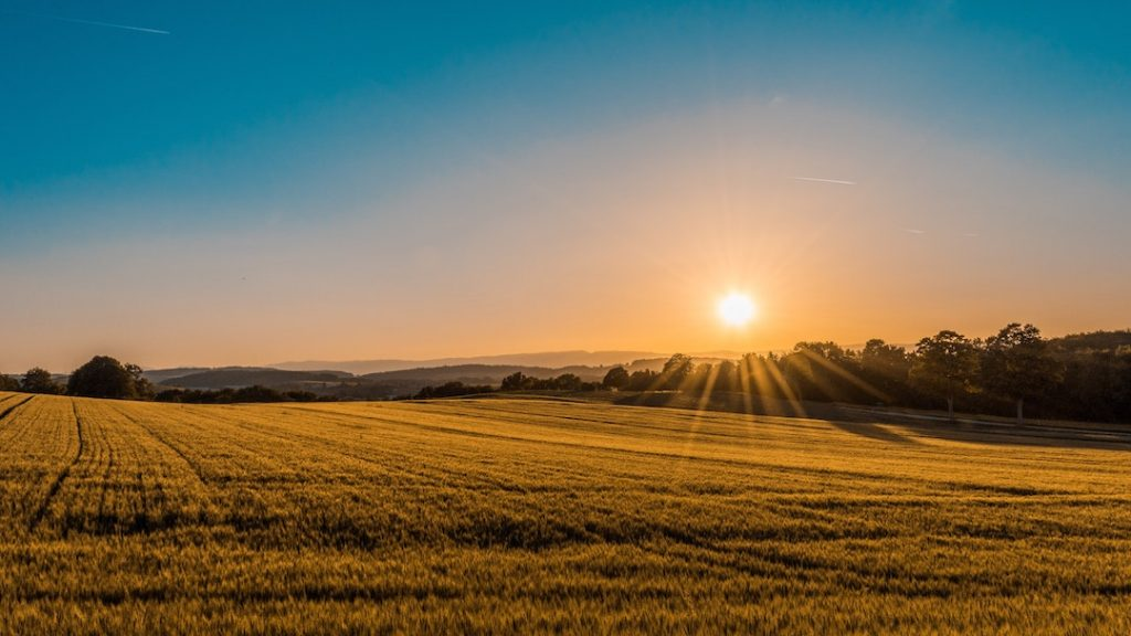 Sun setting over an open field and trees