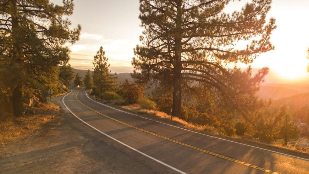 Road winding through pine trees with a sunset