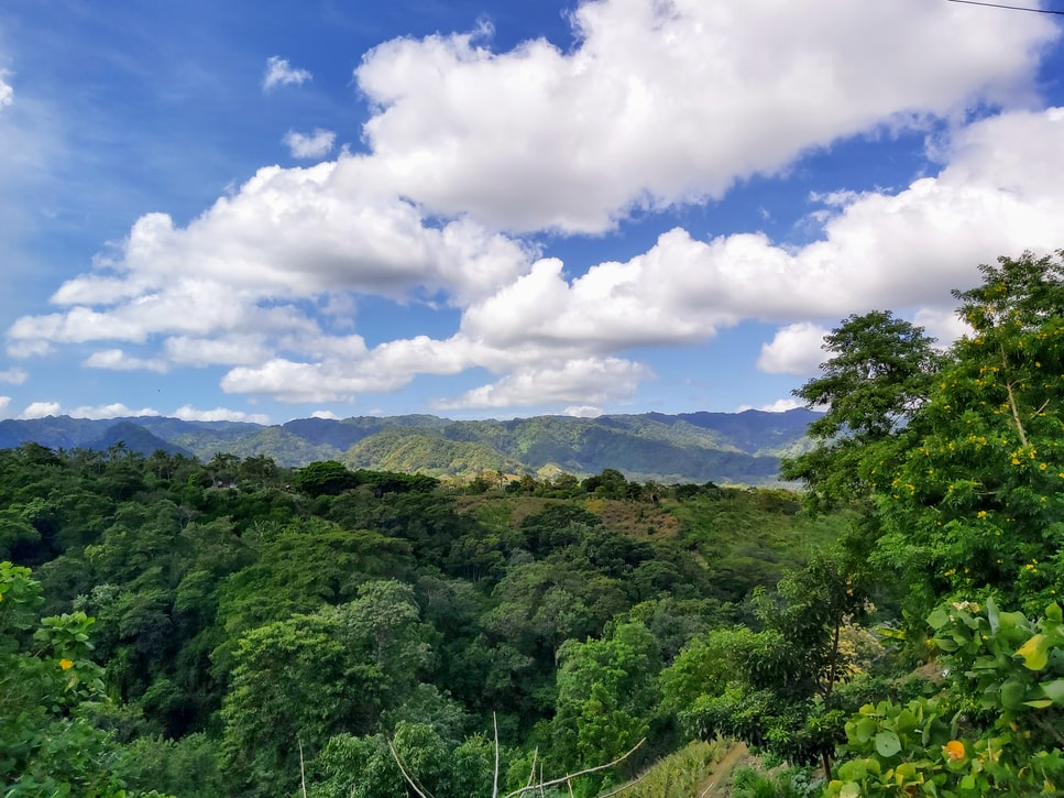 lush green fertile land and trees below a blue sky