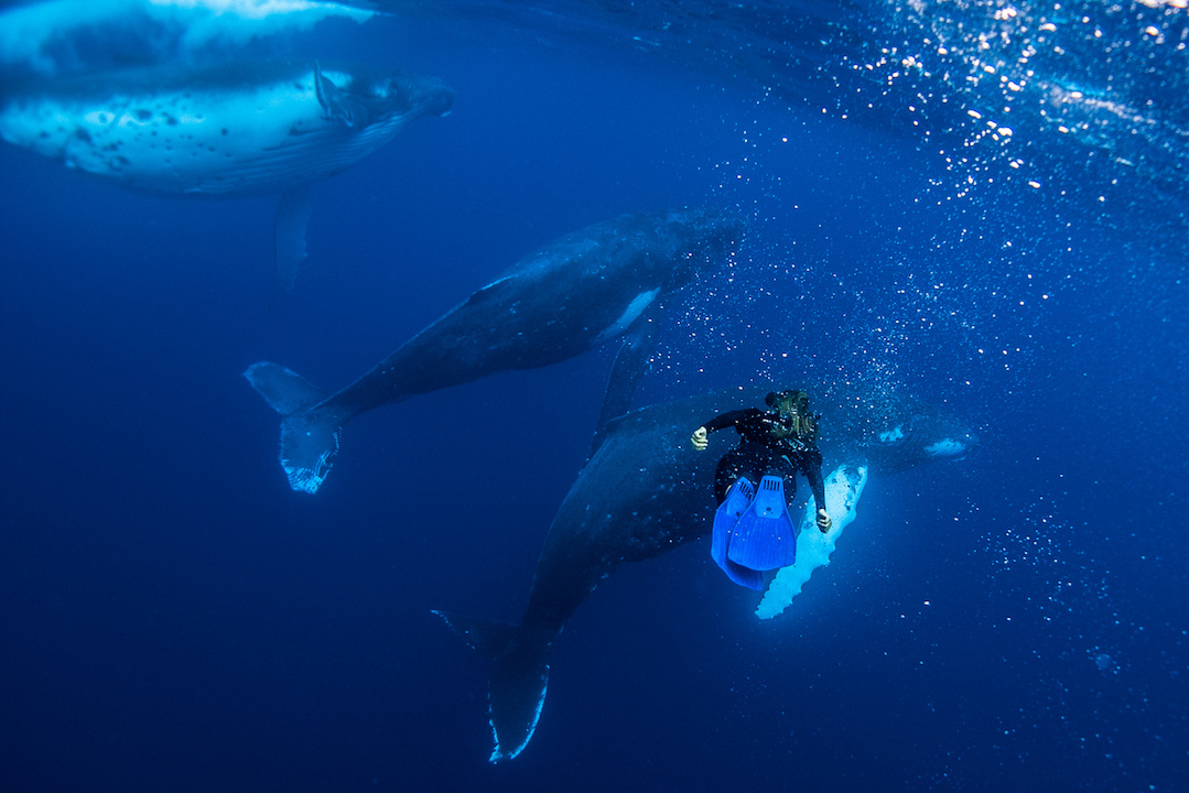Underwater-with-whales