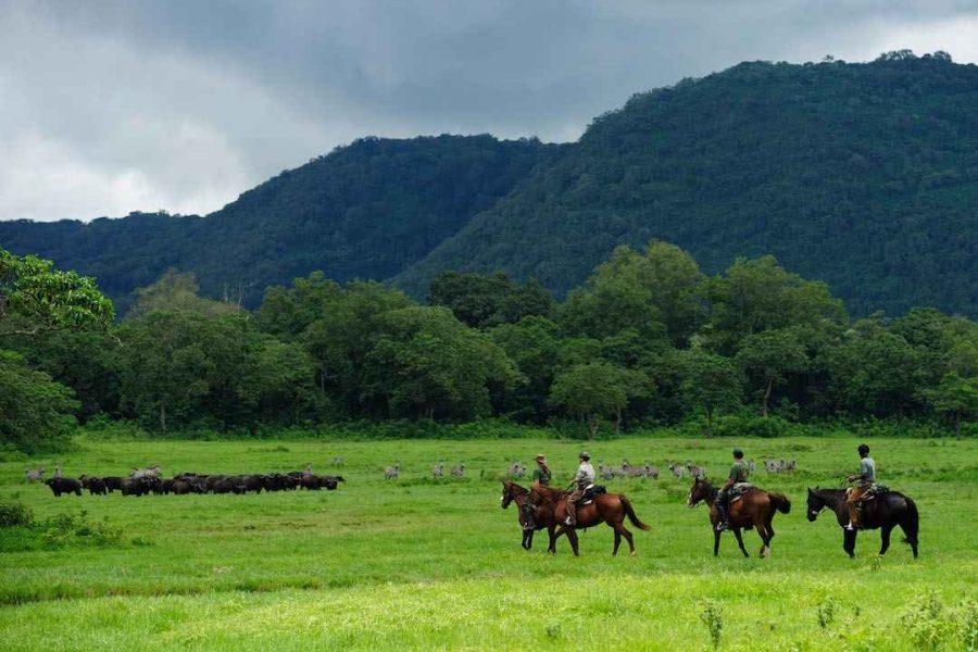 horse tanzania